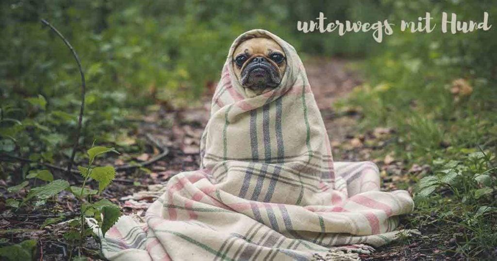 Urlaub mit Hund: Mops in Decke