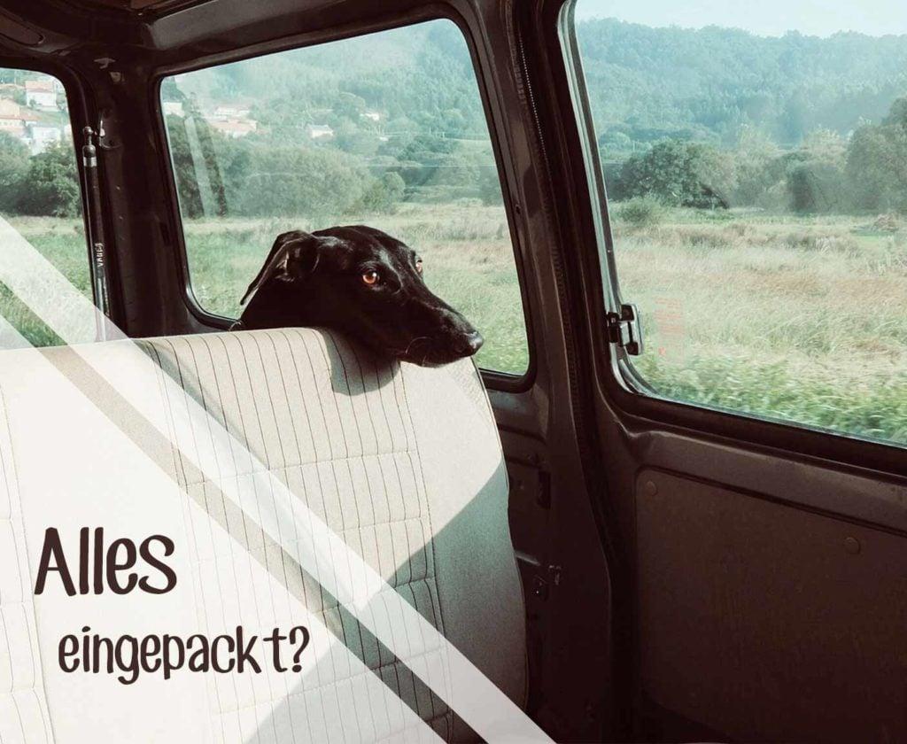 Urlaub mit Hund Packliste