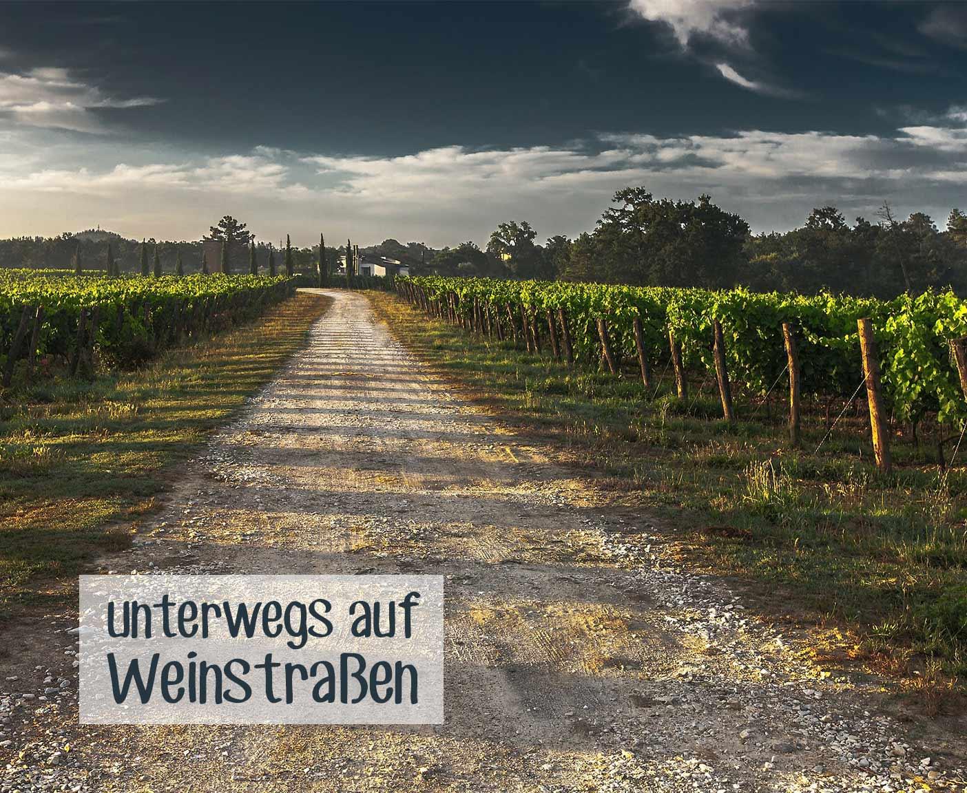 Weingut Schotterweg und Weinreben dunkelblauer Himmel PaulCamper Camping und wein