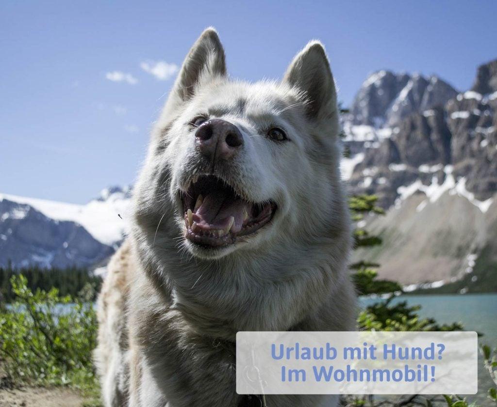 Urlaub mit Hund: Husky in weiß und grau, Berge und See, PaulCamper