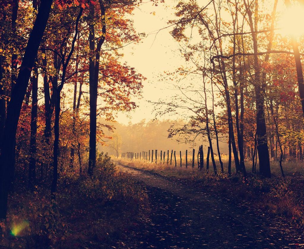 Herstwandeling, bomen, bos, mist, herfst, bladeren