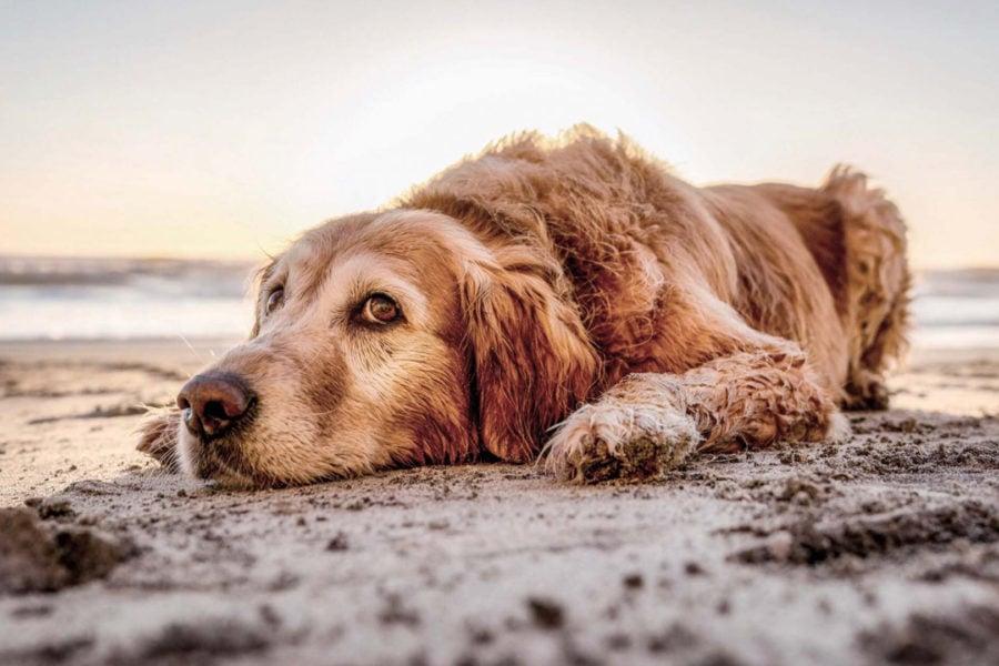 Bild Vakantie met <br>hond in de camper