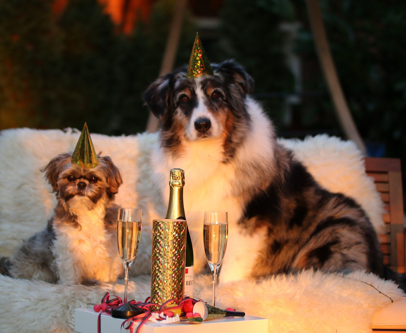 Wo Silvester feiern mit Hunden