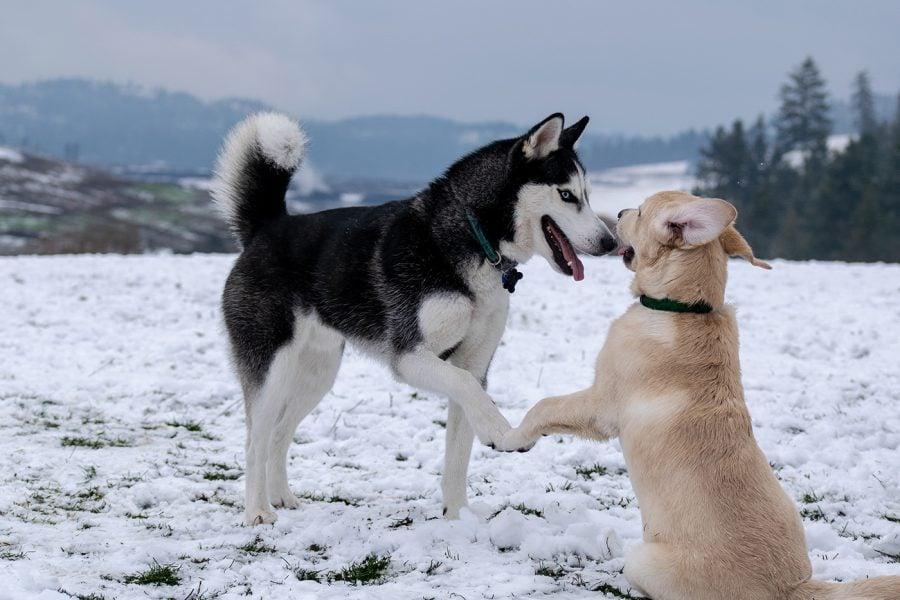Bild Wintercamping mit Hund – Die 9 besten Tipps und Reiseziele