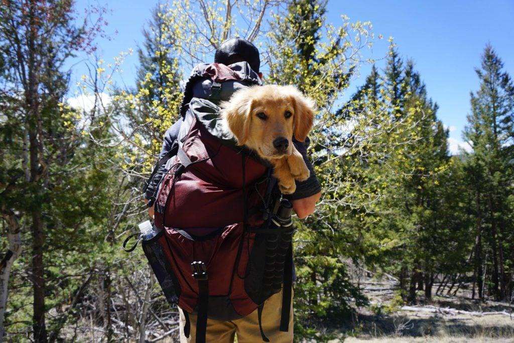 EU Einreisebestimmungen Hund - Mit Hund in der Kraxel