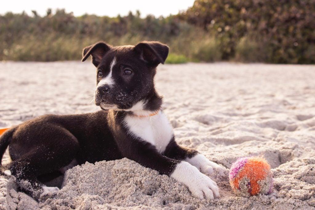 Urlaub mit Hund Deutschland Hundebaby am Strand