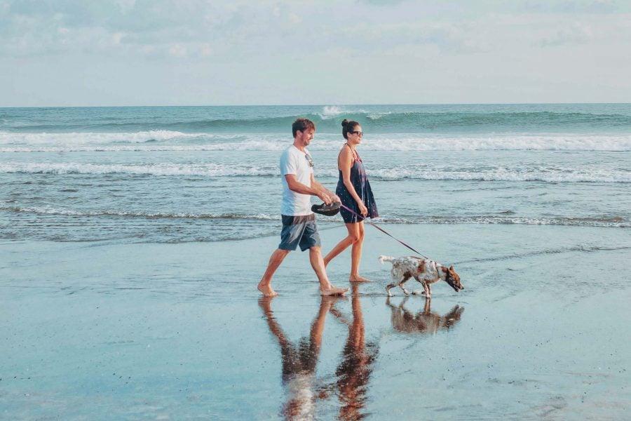 Bild Urlaub mit Hund an der Ostsee – Frische Meeresluft und lange Strände mit dem Hund genießen