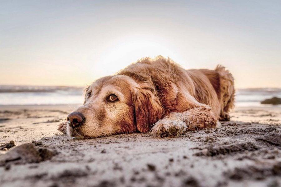Bild Urlaub mit Hund am Meer – das große Abenteuer wartet schon