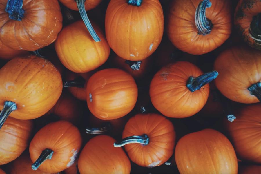 Bild Know-how: Urlaub mit dem Wohnmobil im Herbst