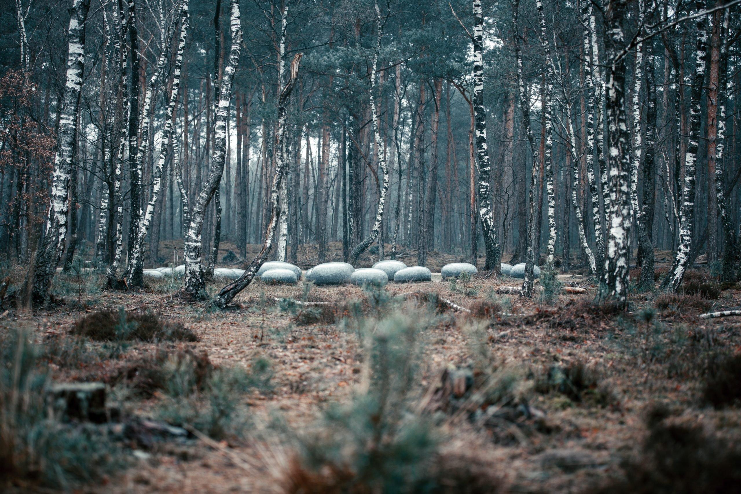 winterkamperen veluwe nederland